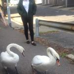 bev with swans