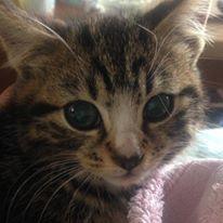 feral-kitten