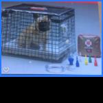 oxygen basket